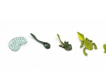 naravoslovje SAFARI LTD Figurice, razvojni krog žabe, Safari Ltd 269129