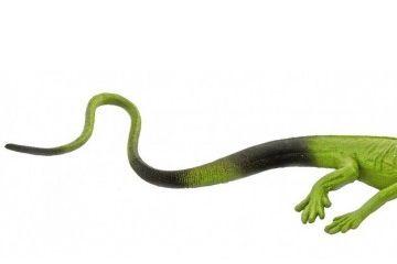 naravoslovje SAFARI LTD Figurice, domači ljubljenčki, Safari Ltd., 681504