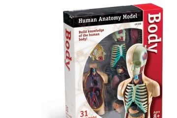 naravoslovje LEARNING RESOURCES Model človeške anatomije, telo, Learning Resources, LER 3336
